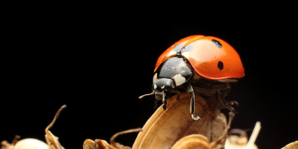 Ladybird - Flash Fiction by Alan Beard