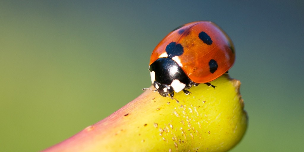 Ladybird - Flash Fiction by Iona Winter