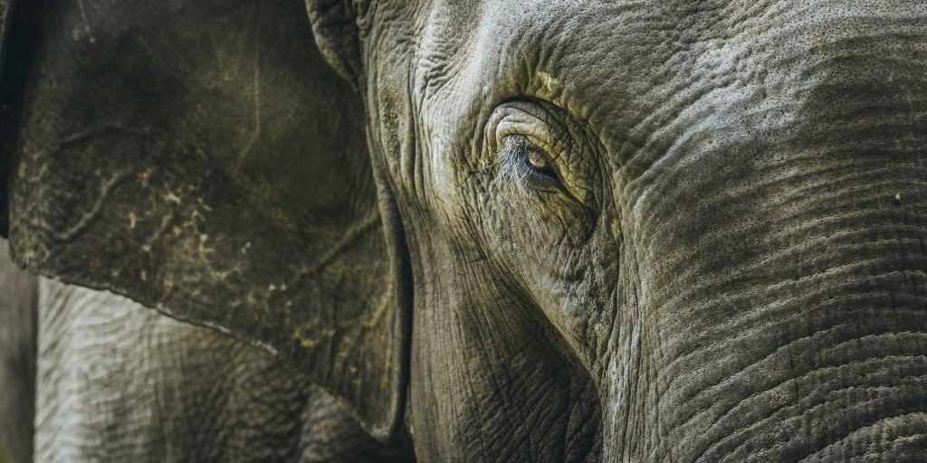 The Elephant Isn't Dancing - Flash Fiction by Penny Monro