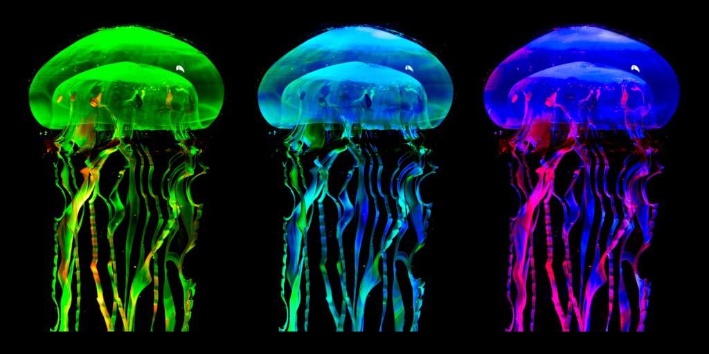 Jellyfish - Flash Fiction by Kate Jones