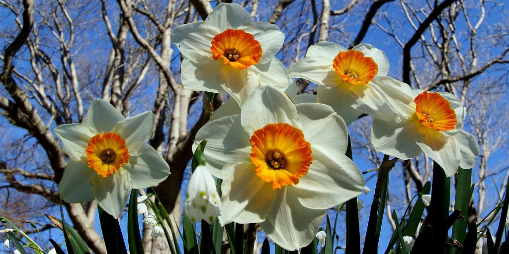 Waiting for Spring - Flash Fiction by Sophie Petrie