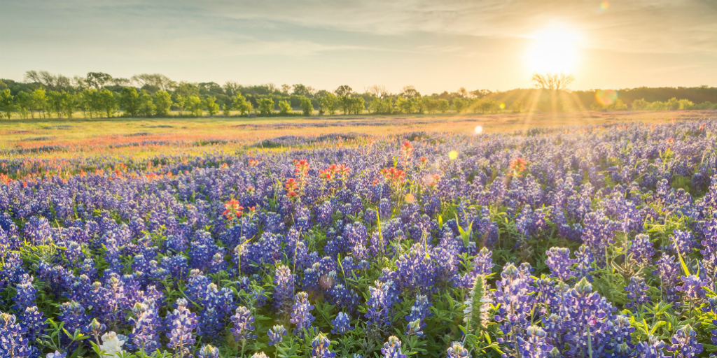 Wildflower - Flash Fiction by Heather Anderson