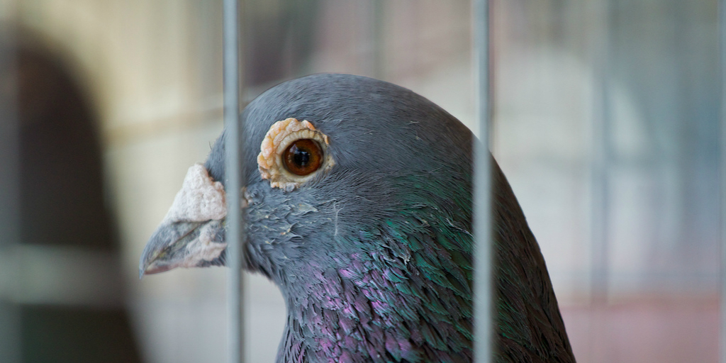 Pigeons and Fish - Flash Fiction by Paul Clancy