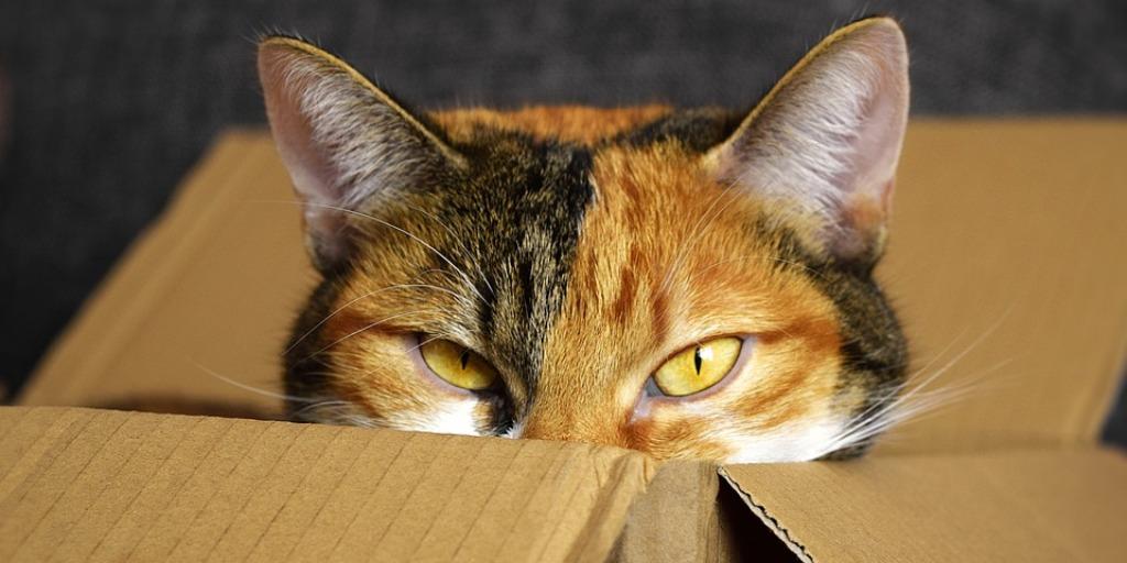 Pandora's Cat - Flash Fiction by Tracy Fells