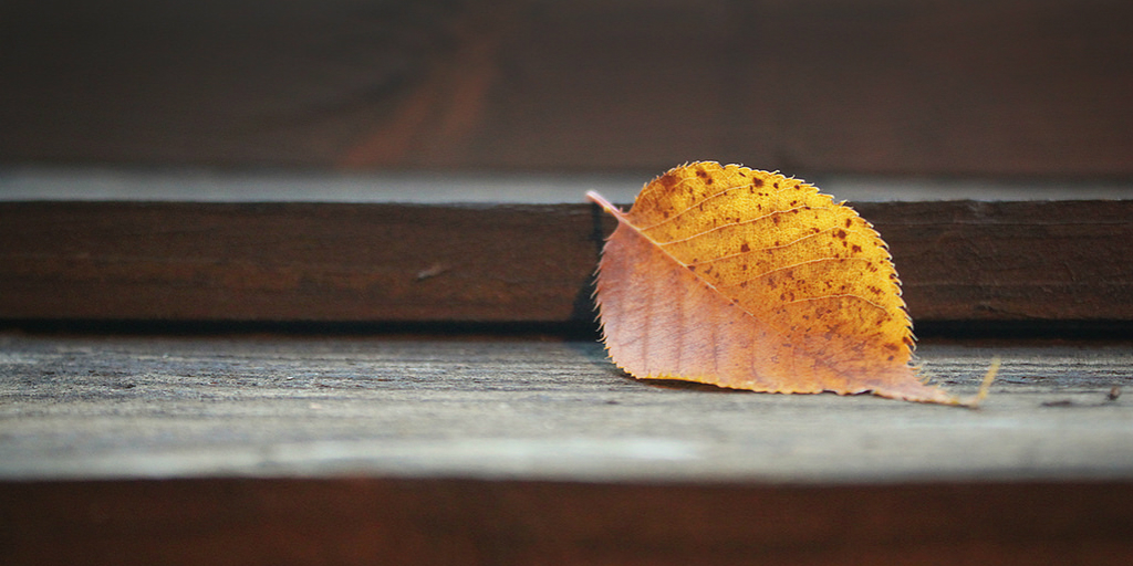 Leaves - Flash Fiction by J Cammish McKeen